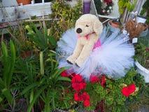 在芭蕾舞短裙填充动物玩偶的小狗 图库摄影