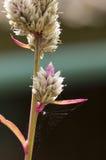 在花上的蜘蛛网 免版税库存照片
