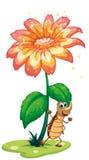 在花下的一只蟑螂 库存图片