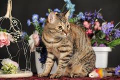 在花中的美丽的棕色猫 图库摄影