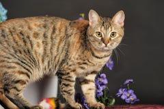 在花中的美丽的棕色猫 库存图片