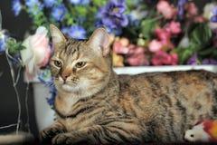 在花中的美丽的棕色猫 免版税图库摄影