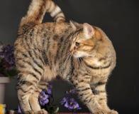 在花中的美丽的棕色猫 免版税库存图片