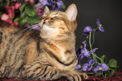 在花中的美丽的棕色猫 免版税库存照片