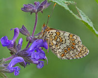 在花中的蝴蝶 库存图片