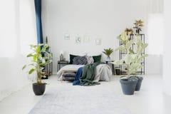 在花卉卧室内部的榕属 免版税库存照片