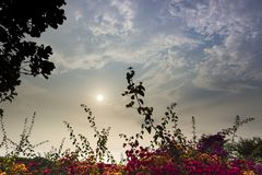 在花后的太阳 图库摄影