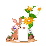 在花园的逗人喜爱的袋鼠有空白的标志的 免版税库存图片