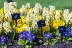 在花圃种植的被分类的五颜六色的花在Kew庭院,伦敦,英国里 免版税库存照片