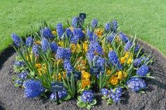 在花圃种植的被分类的五颜六色的花在Kew庭院,伦敦,英国里 免版税图库摄影