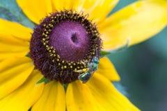 在花宏指令关闭的绿色蜂 免版税库存图片