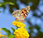 在花宏指令射击的美丽的蝴蝶 库存照片