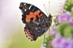 在花宏指令照片的蝴蝶 免版税库存照片
