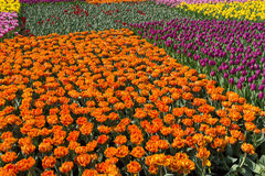 在花展的花在香港 库存图片