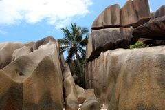 在花岗岩之间的一棵棕榈树在塞舌尔群岛晃动 免版税库存照片