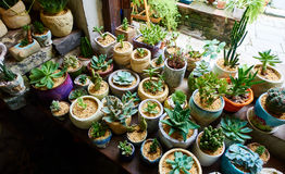 在花店的盆的花 图库摄影