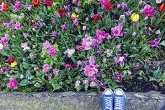 在花开花的旅行的窃笑 免版税库存照片