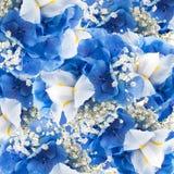 在花束、蓝色八仙花属和白色的花 库存图片
