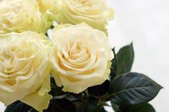 在花束特写镜头的四朵美丽的乳脂状的玫瑰 免版税库存照片