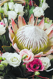 在花束的普罗梯亚木花 图库摄影