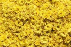 在花束的黄色菊花在花市场上 免版税图库摄影