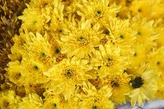 在花束的黄色菊花在花市场上 库存图片