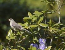 在花植物的鸟 库存图片