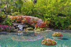 在花池塘附近 免版税图库摄影