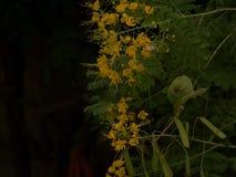 在花灌木的罗斯圈状的长尾小鹦鹉 免版税库存照片