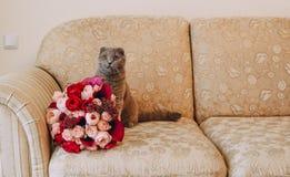 在花玫瑰长沙发花束的灰色大猫  免版税库存图片