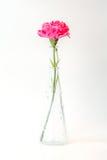 在花瓶的一支桃红色康乃馨家庭装饰的 免版税图库摄影
