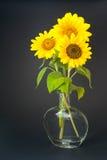 在花瓶的三个向日葵用水 免版税库存照片