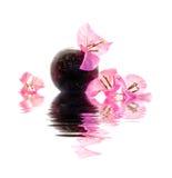 在花瓶的九重葛桃红色花 免版税库存图片