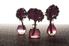 在花瓶的亚洲无头甘蓝茎 库存照片
