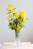 在花瓶的含羞草 库存图片
