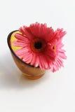 在花瓶的大丁草雏菊 库存图片