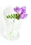 在花瓶的小苍兰 免版税库存图片