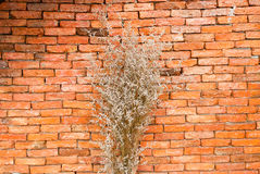在花瓶的干花,室桔子 图库摄影