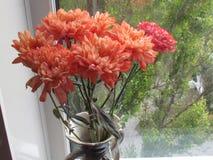 在花瓶的康乃馨 库存照片