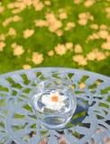 在花瓶的浮动花 免版税图库摄影