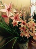 在花瓶的淡粉红的百合 免版税库存图片