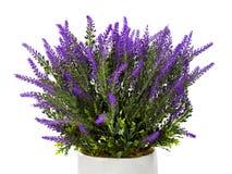 在花瓶的淡紫色 库存照片