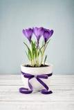 在花瓶的番红花 免版税图库摄影