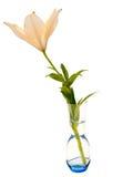在花瓶的米黄百合,隔绝在白色背景 库存照片