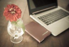 在花瓶的红色flowre 库存图片