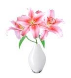 在花瓶的美丽的桃红色百合在白色背景 库存图片
