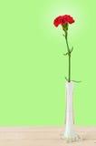 在花瓶的美丽的红色康乃馨 免版税库存图片