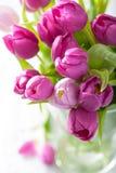 在花瓶的美丽的紫色郁金香花 库存图片