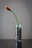在花瓶的花有装饰岩石的 免版税库存图片