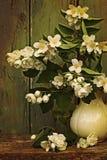 在花瓶的茉莉花花 免版税库存图片
